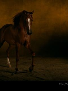horses of the night by margaret laurence 2 essay Horses of the night essays: in the short story, horses of the night, the author, margaret laurence, discusses the idea of escaping reality chris.