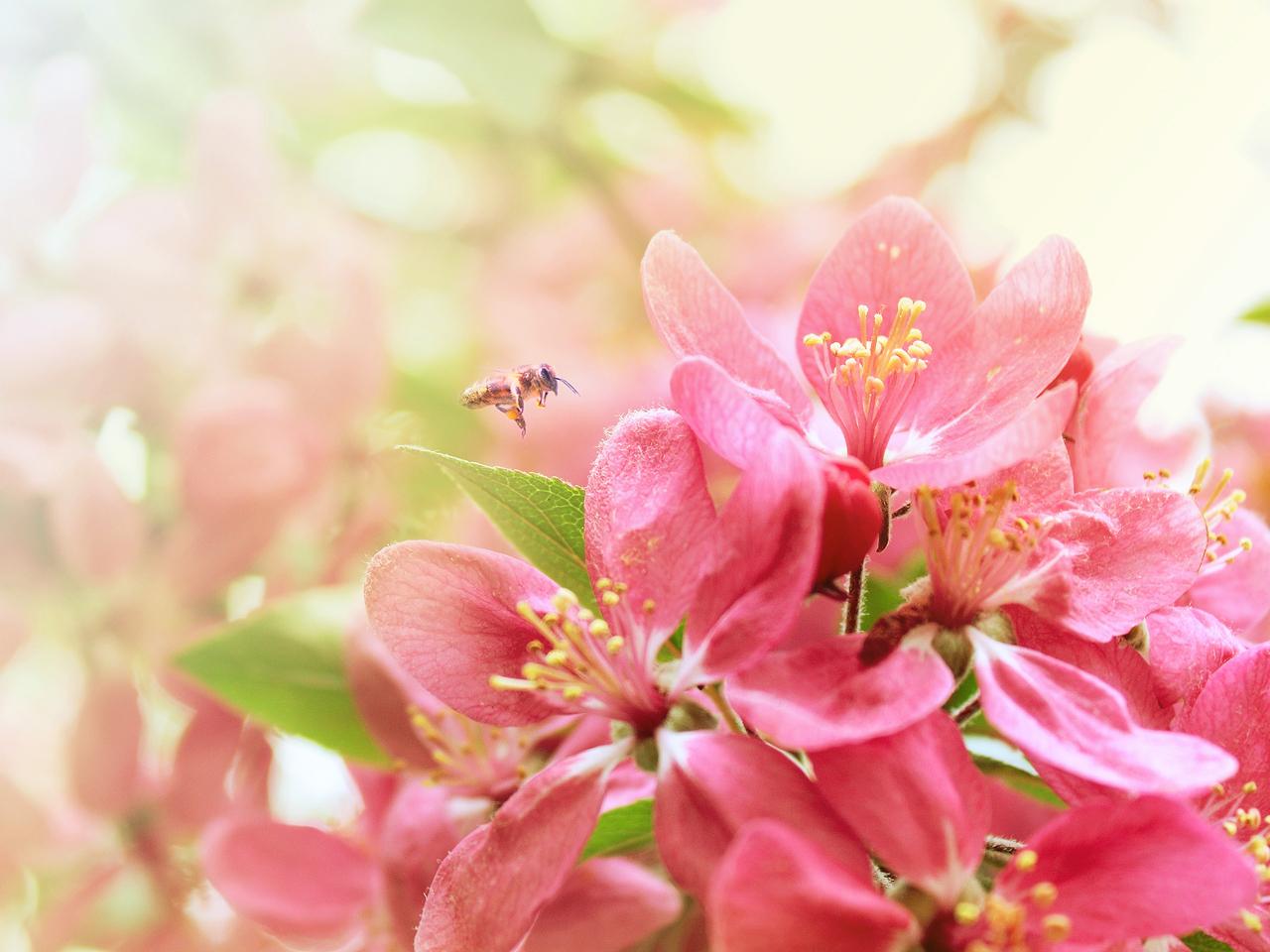 Весенние цветы 1280 x 960