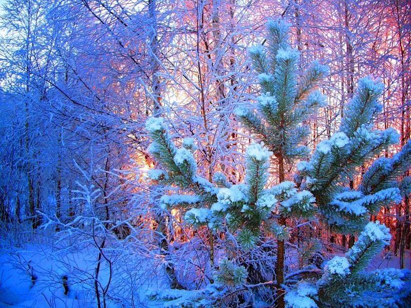 Новогодняя природа 800 x 600