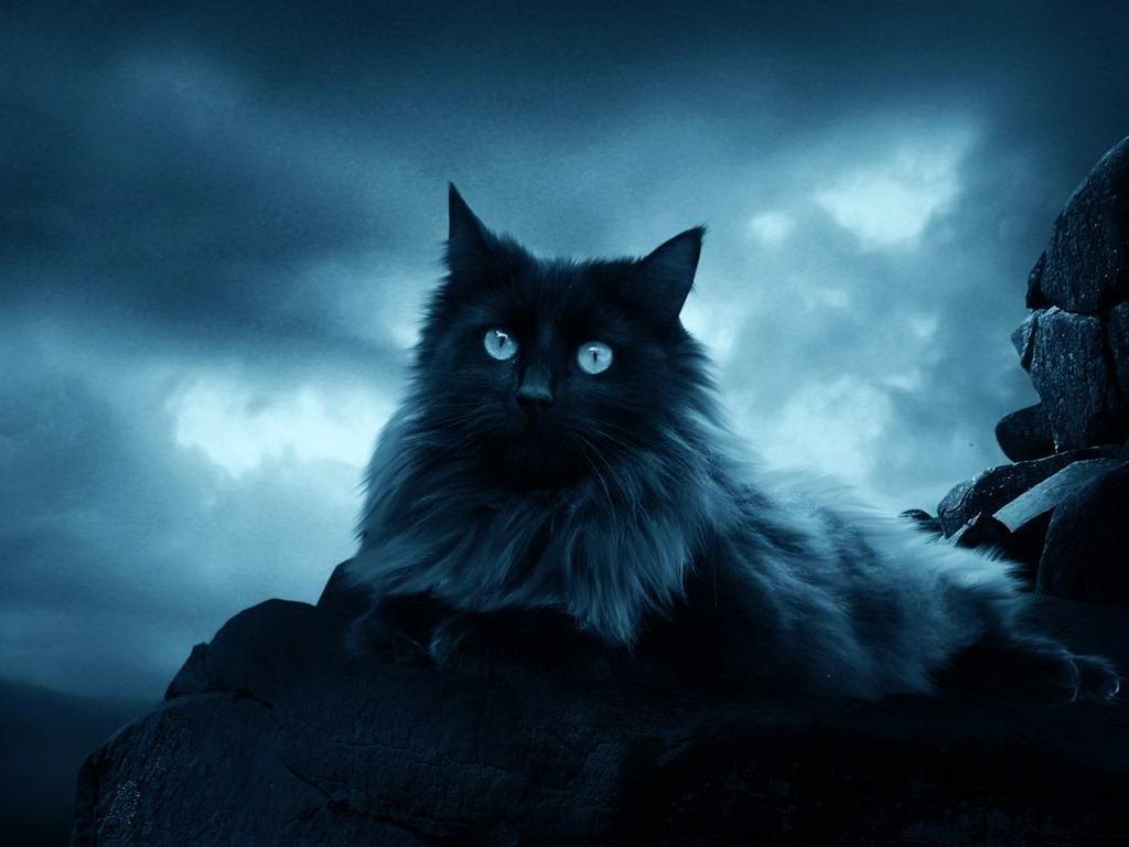 Готическая кошка 1024 x 768