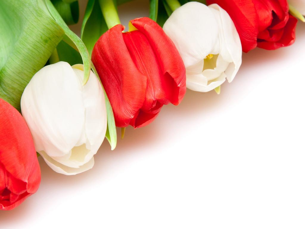 Цветы на красном фоне картинки 2