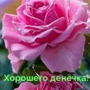 Хорошего денёчка!