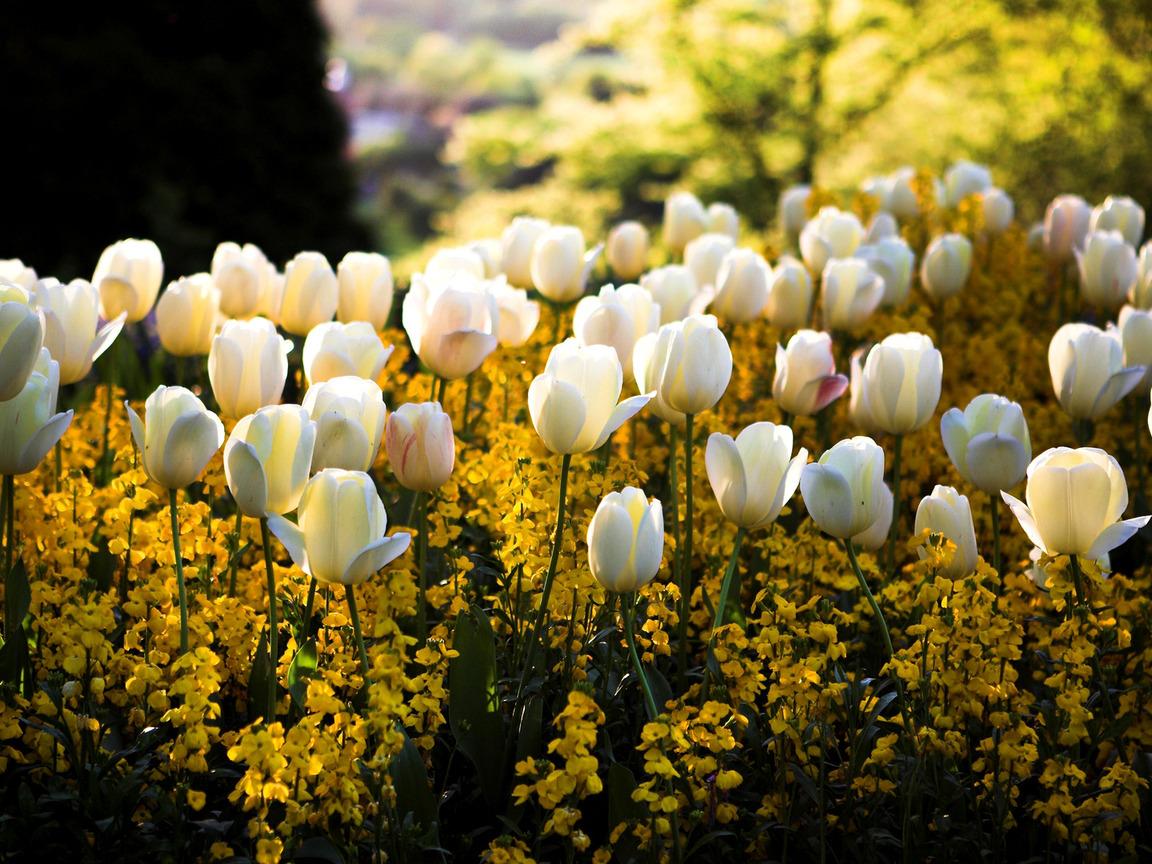 Классные цветы картинки 5
