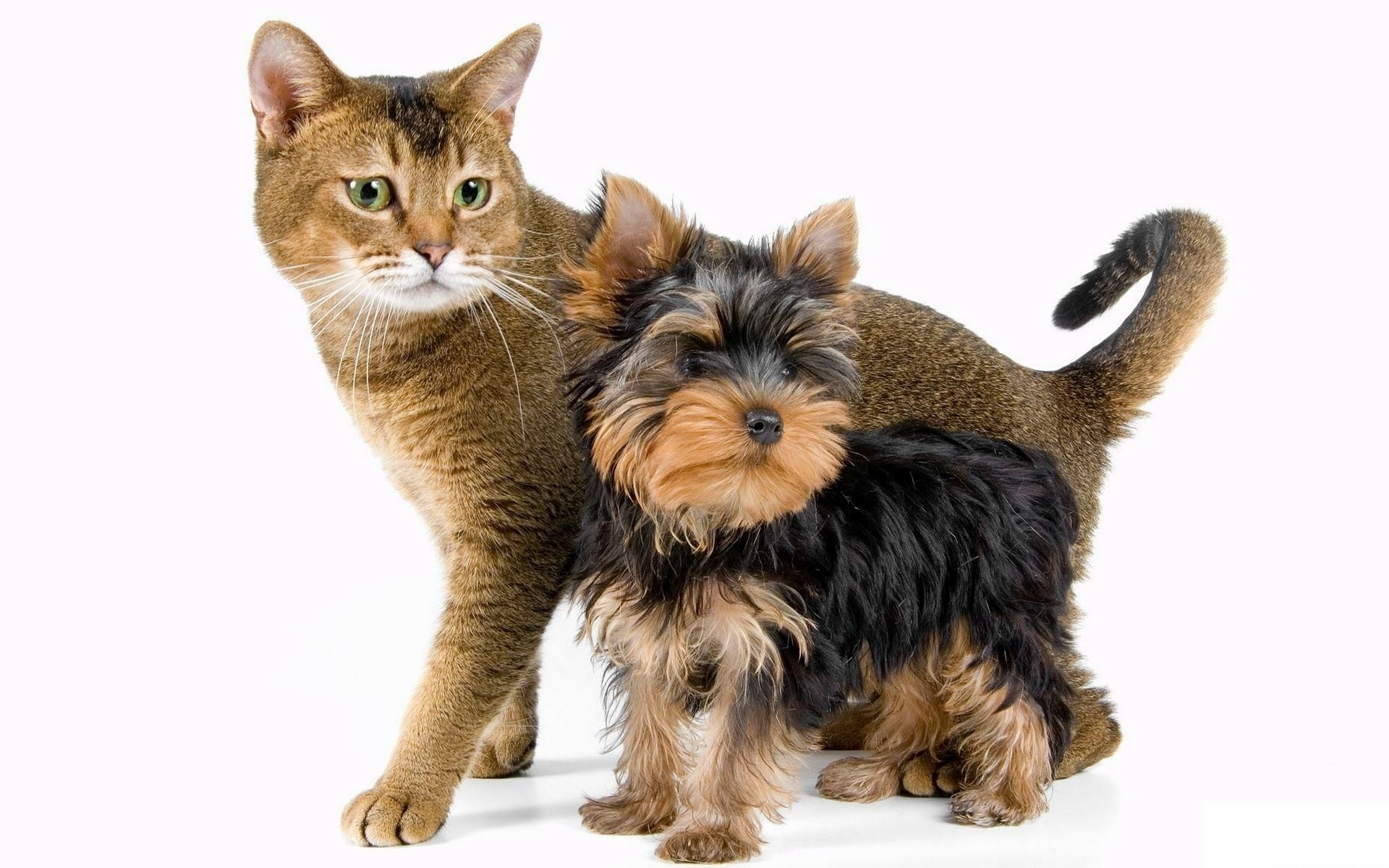 Собака и кот 1920 x 1200
