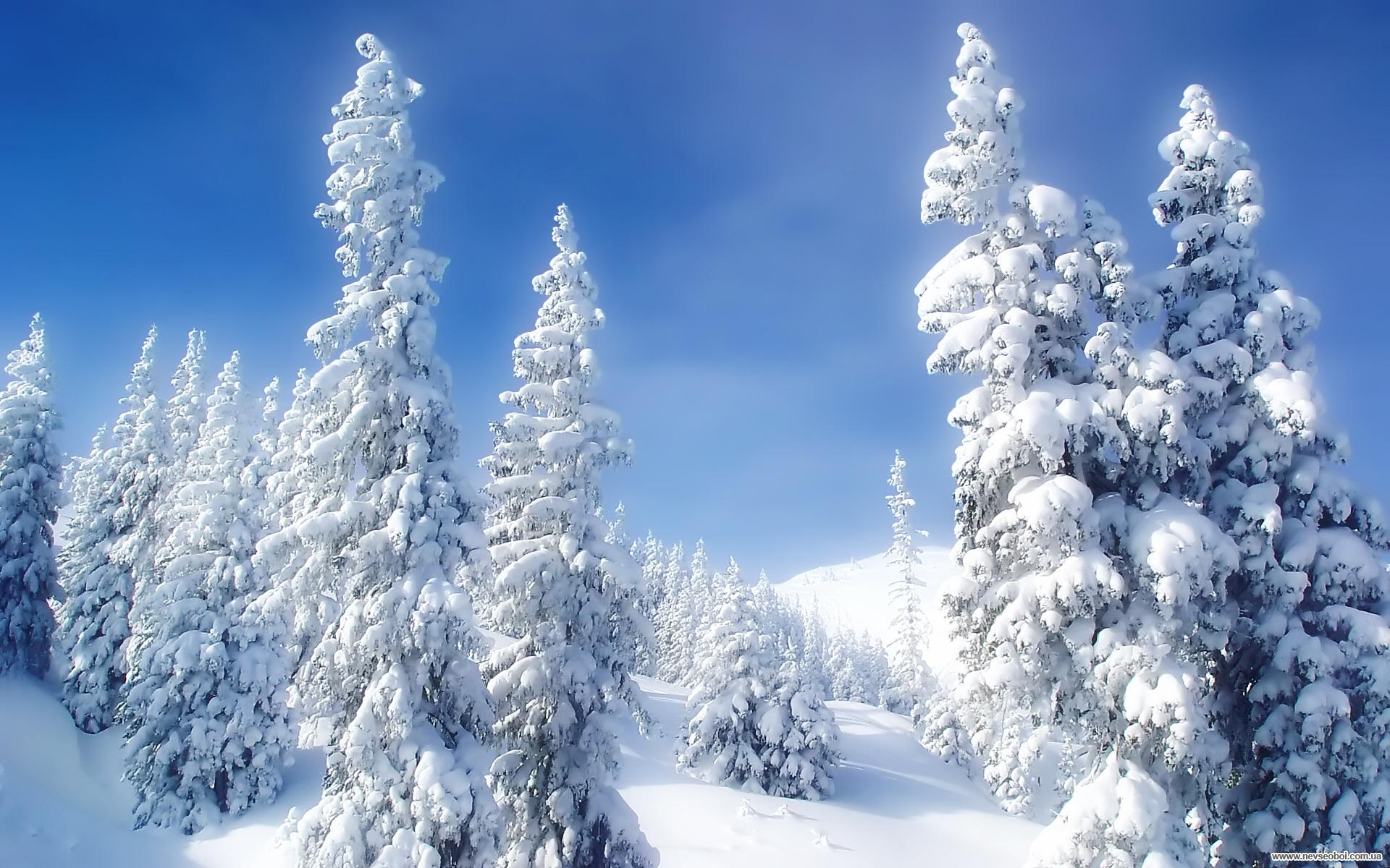 Зима 1920 x 1200