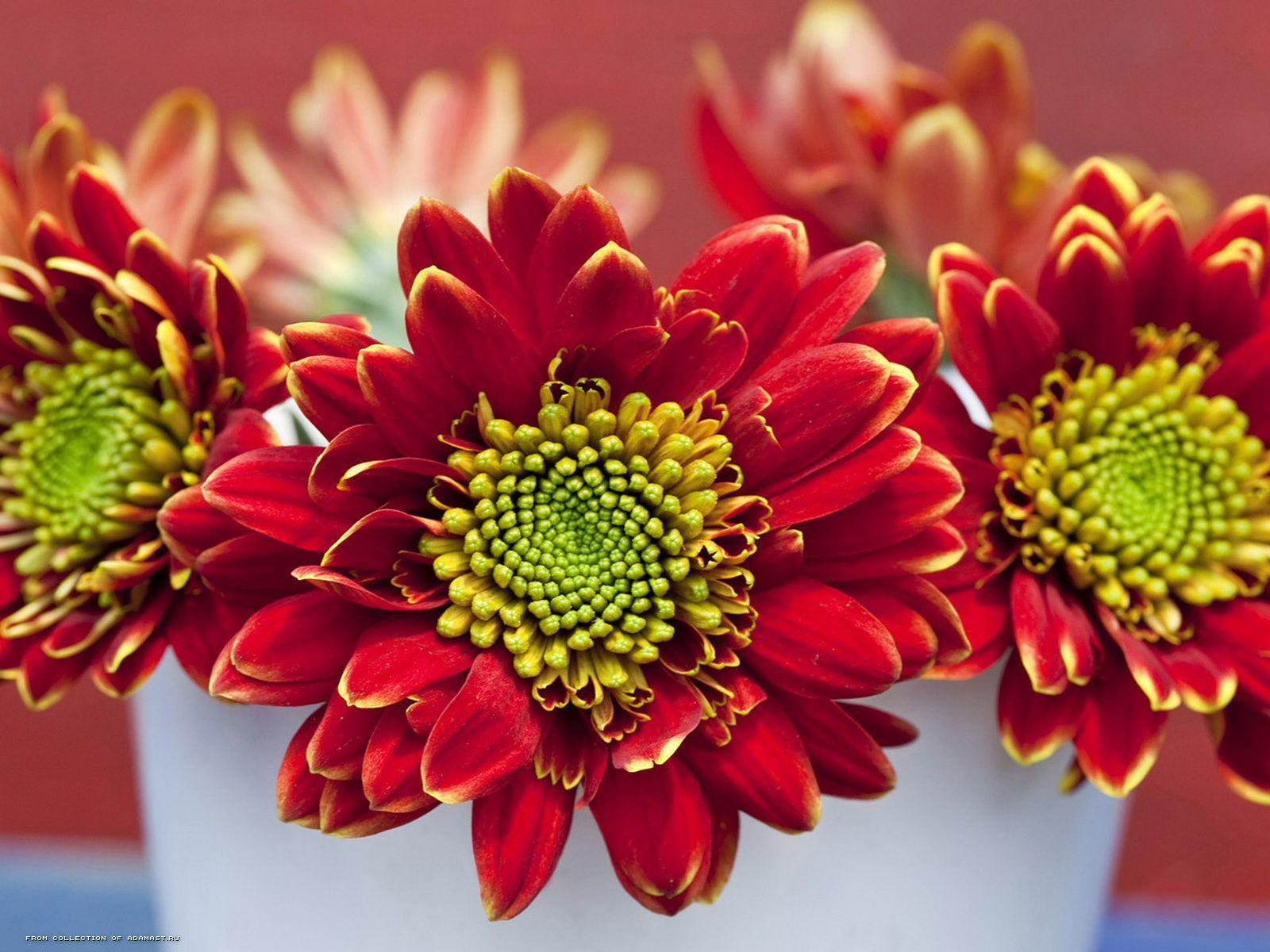 Обалденные цветы 1600 x 1200