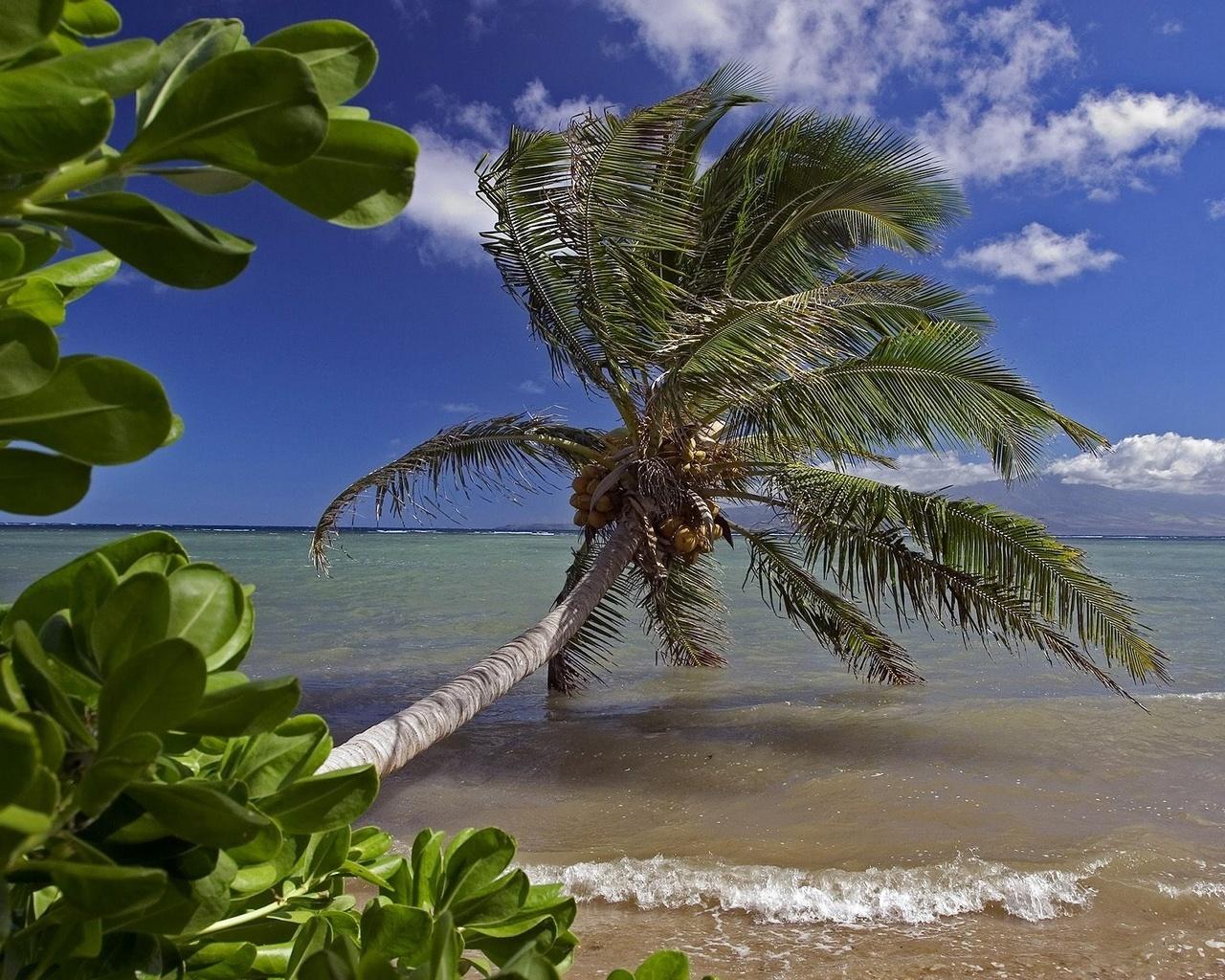 Солнце море пальмы пляж 1280 x 1024