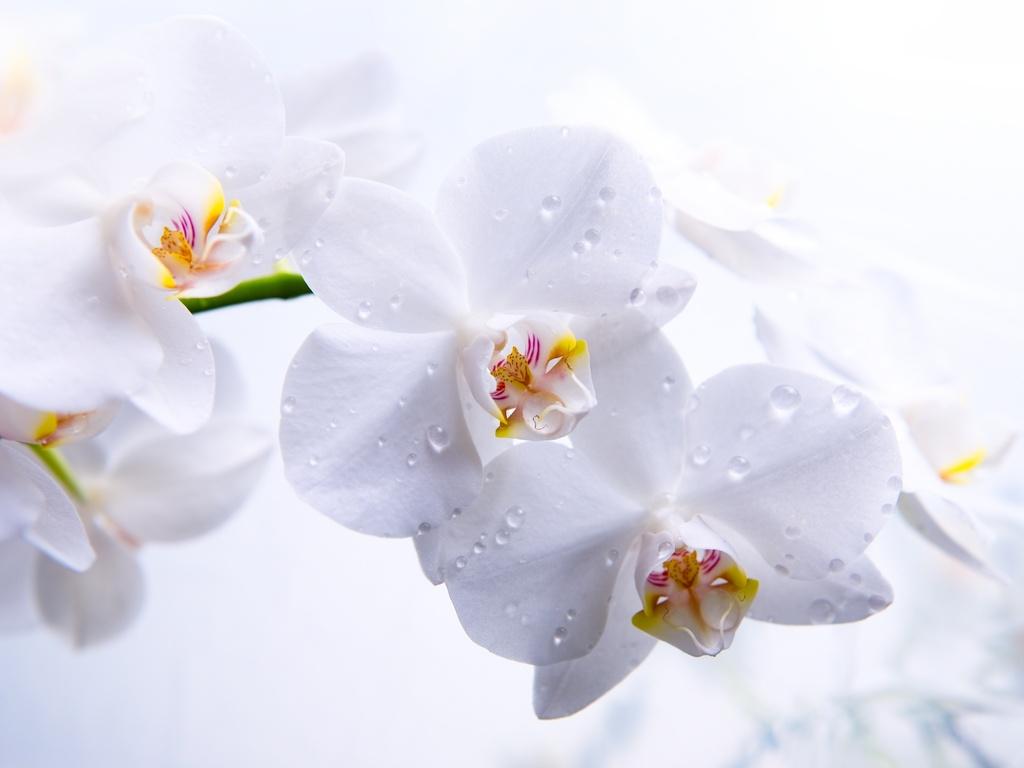 Белые цветы картинки 8