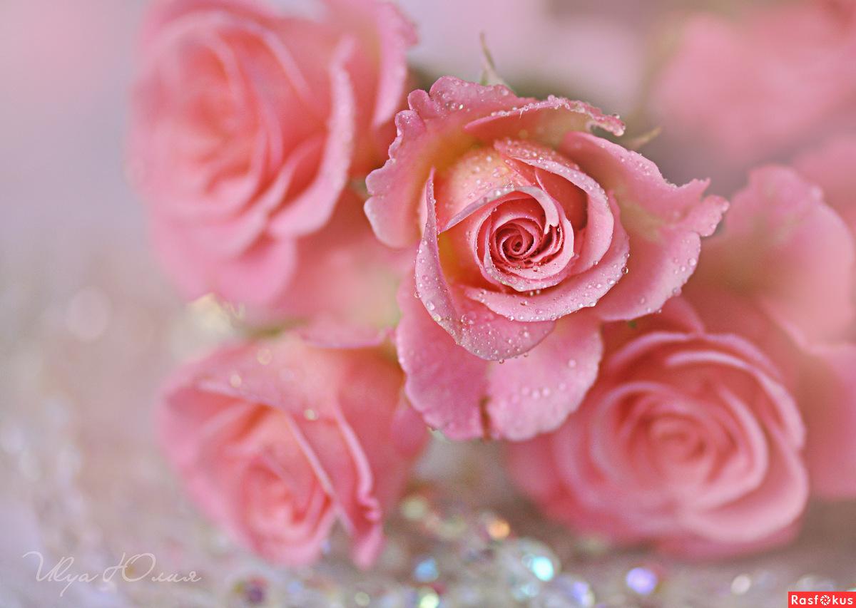 розовый цвет во сне 78633