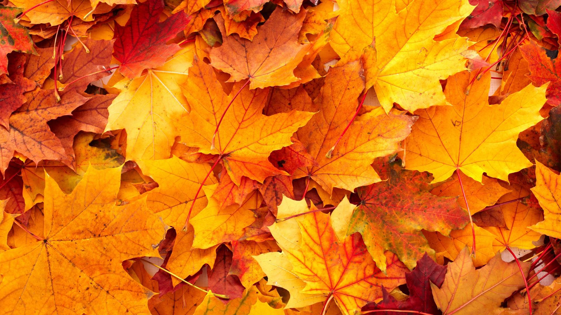 Фотообои для рабочего стола картинки осенних листьев