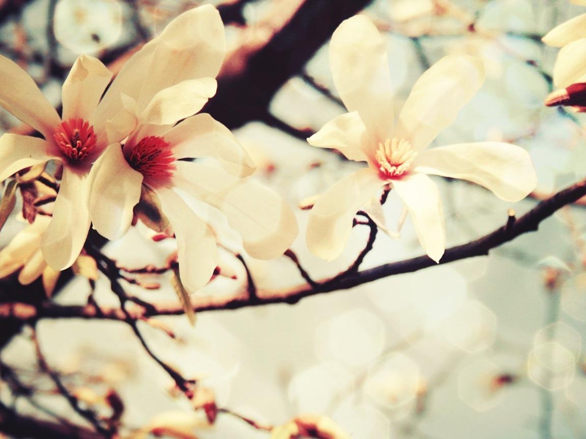 Цветы ванили картинки 2