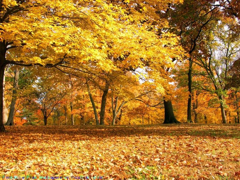 Золотая осень 800 x 600