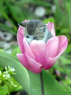 Котёнок-Дюймовочка(Talochka)