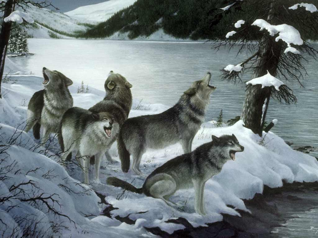 Волки 1024 x 768