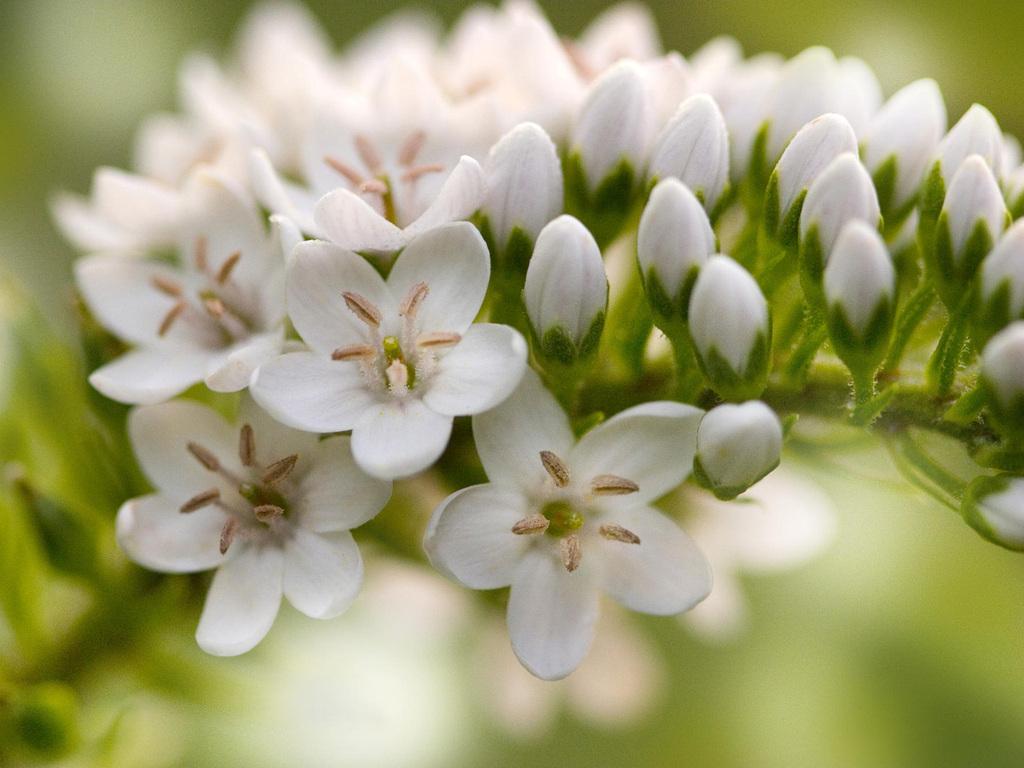 Весенние цветы 1024 x 768