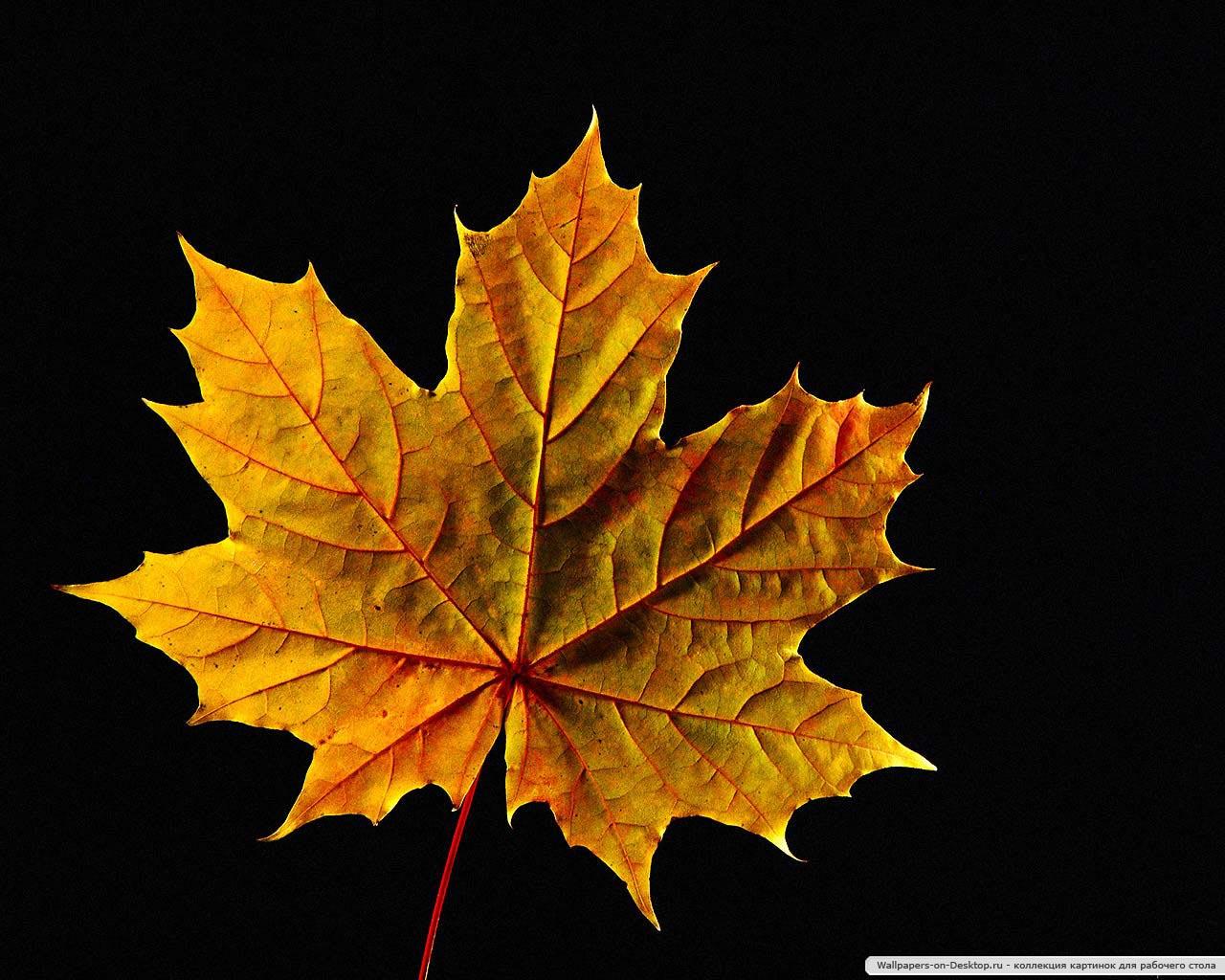 Форма листя дерев фото 11 фотография