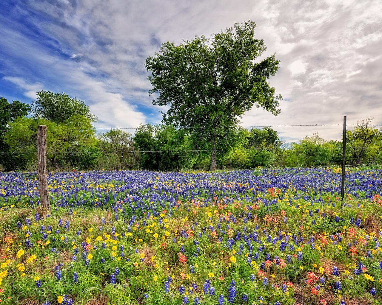 Весна лето 1280 x 1024