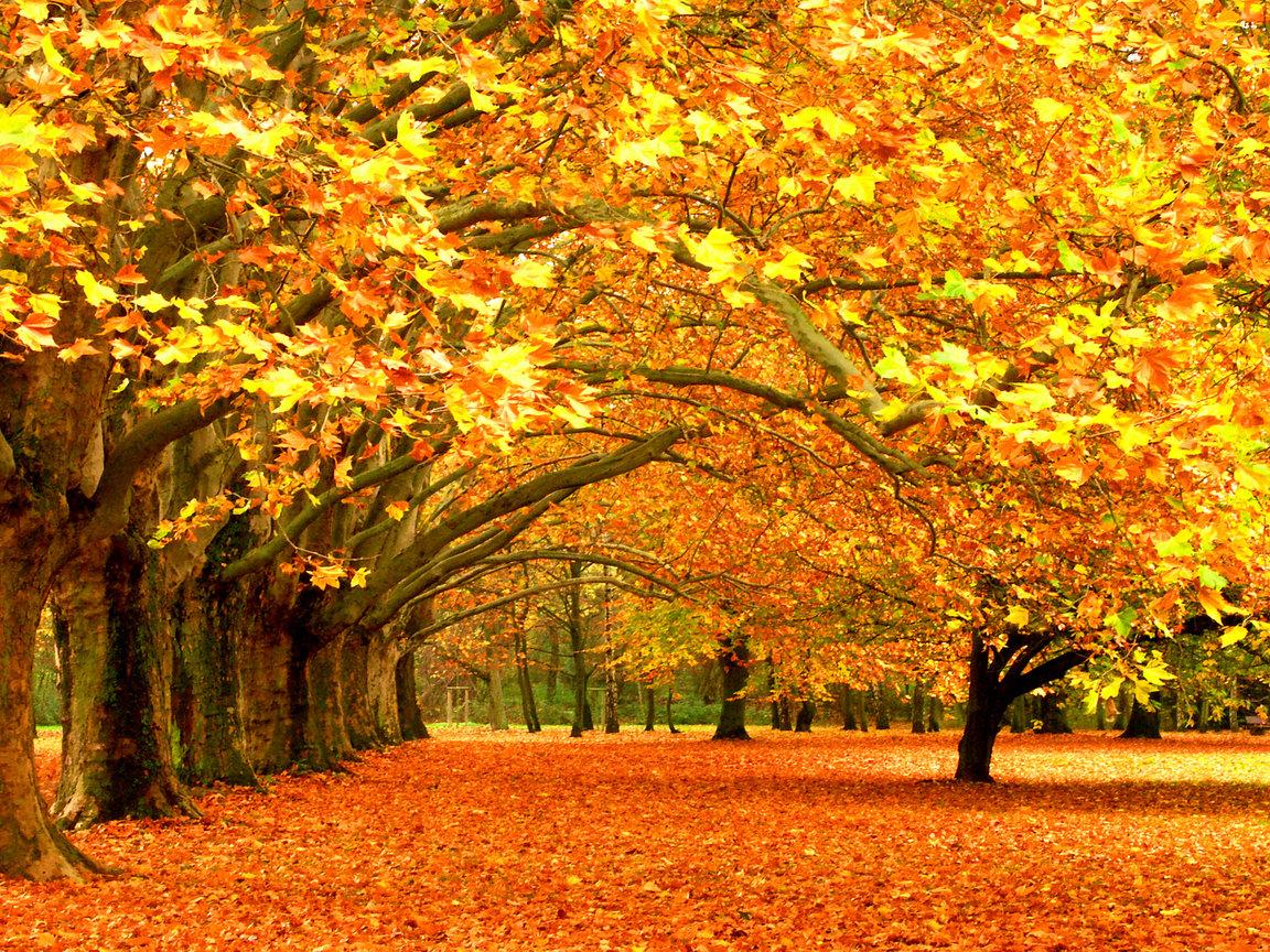 Стол осень