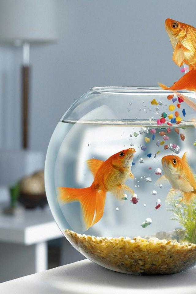Картинки с рыбками графика