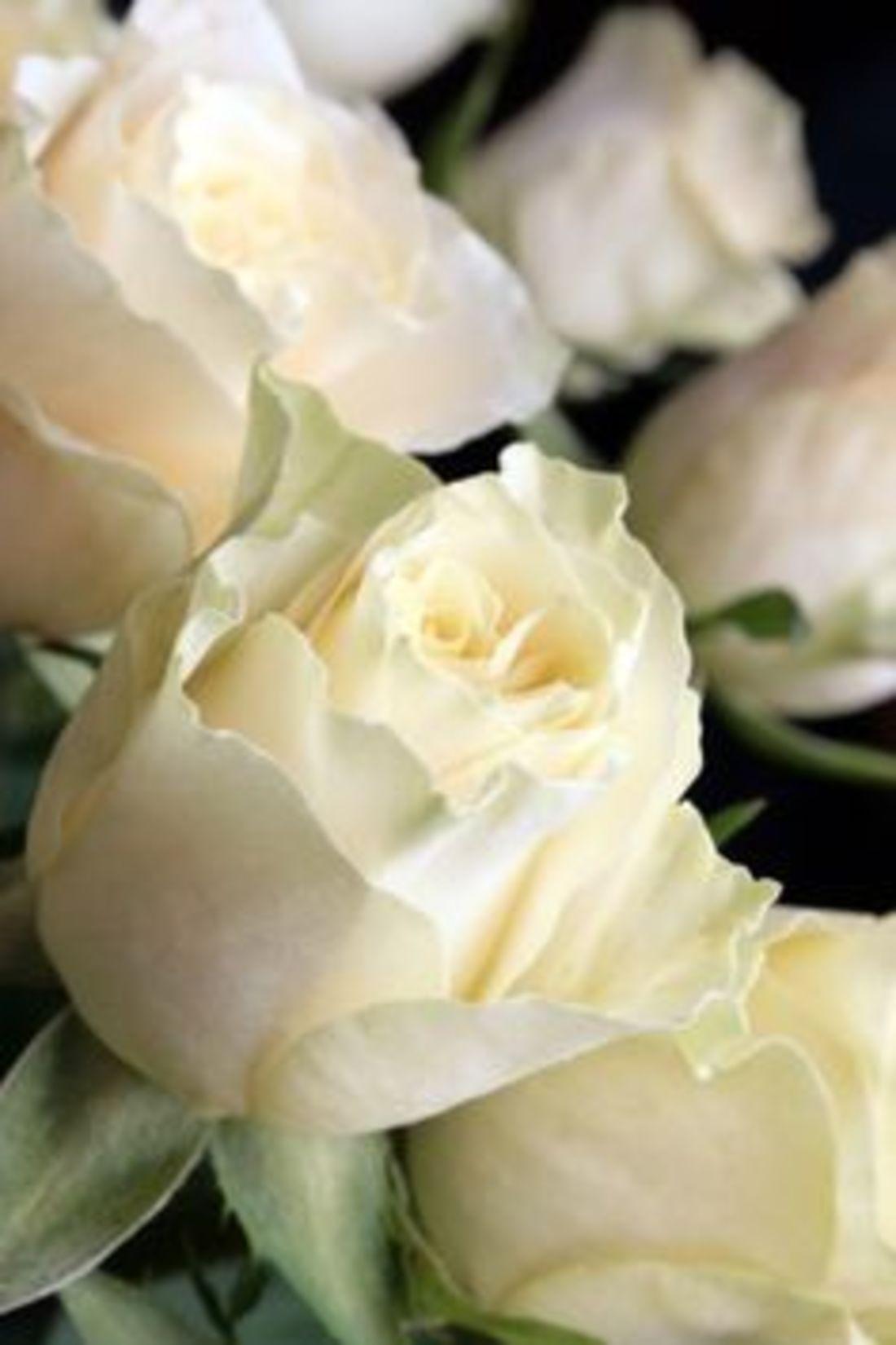 Приснились белые розы 2