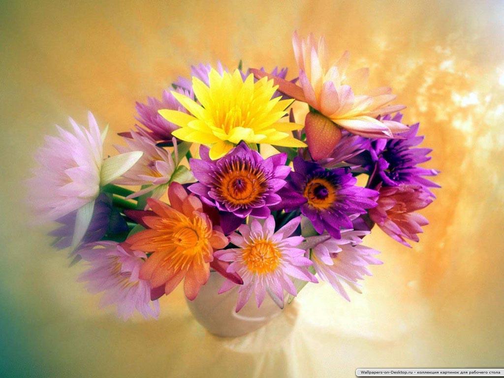 Полевые цветы 1024 x 768