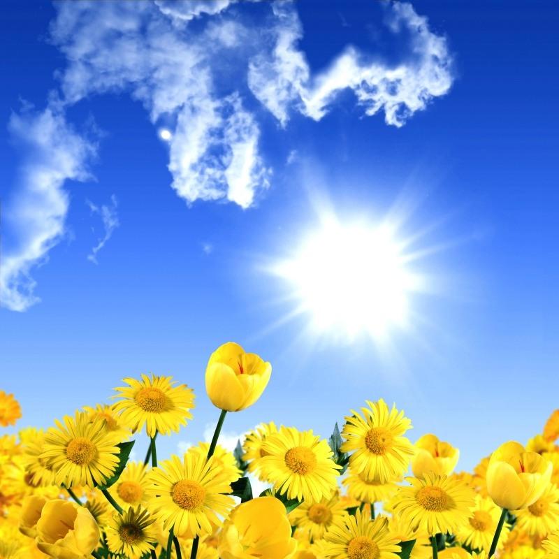 Картинки цветов и солнца 2