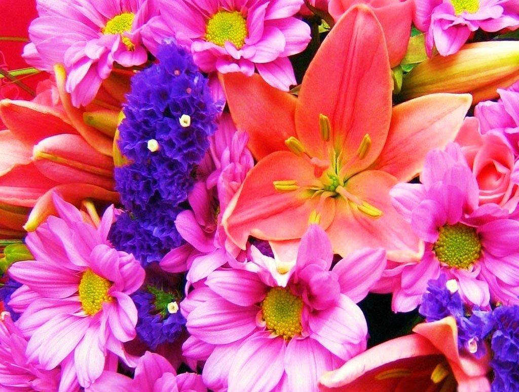 Картинки цветы бесплатно 3