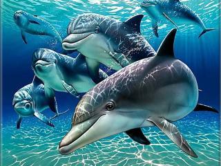 Разместите обои дельфины от katerinka на