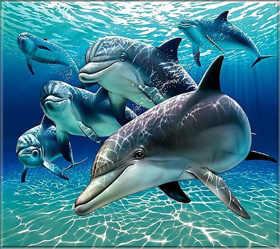 Дельфины 960 x 854