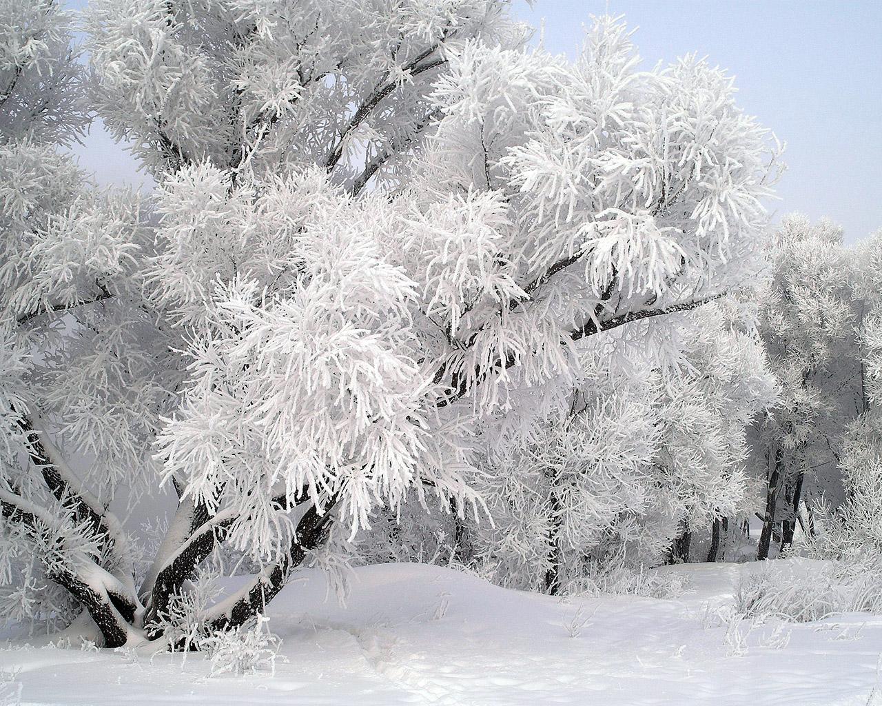 Зима 1280 x 1024