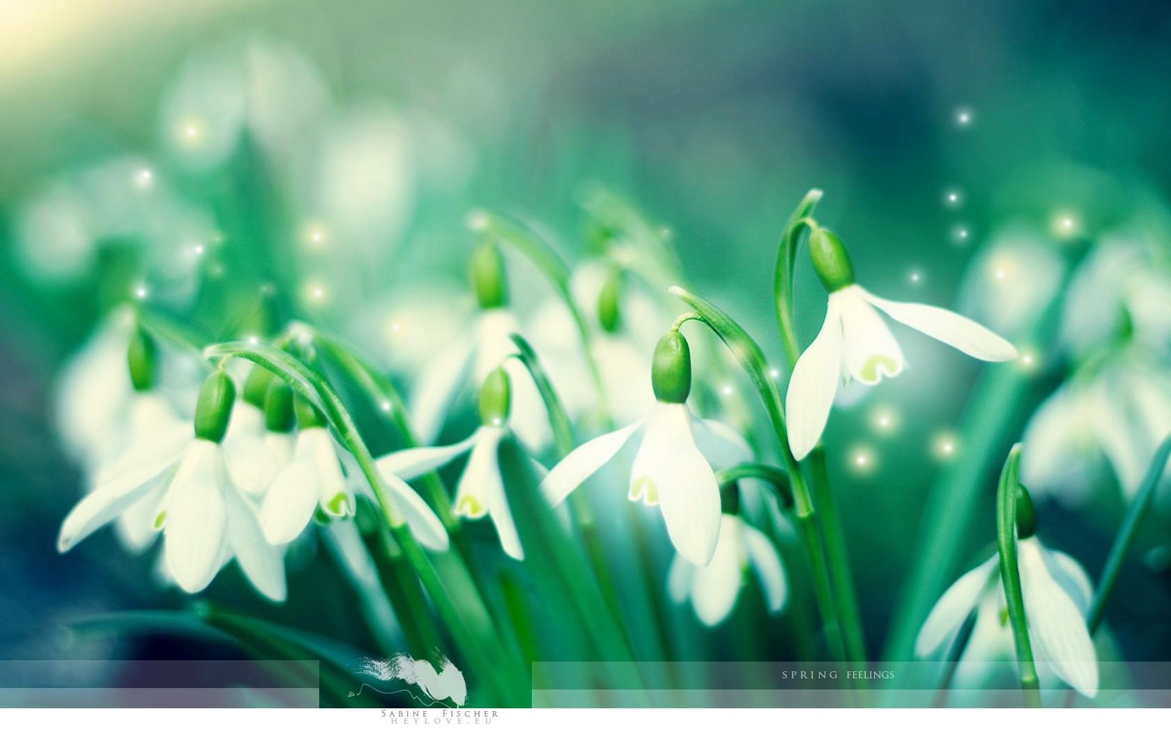 красивые картинки на рабочий цветы: