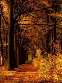 Картинка осенний лес - 5923