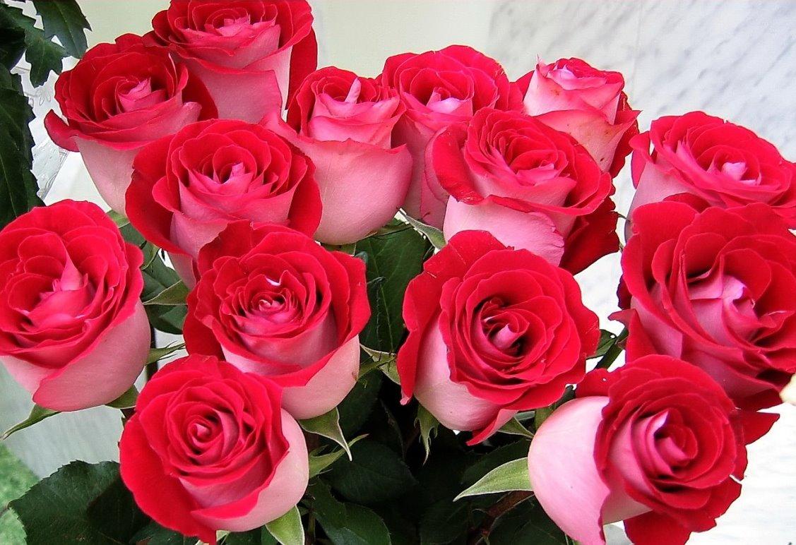 Красивые красные розы фото photo bonus ru