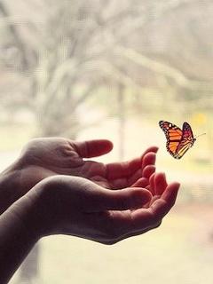 картинка в руках бабочка