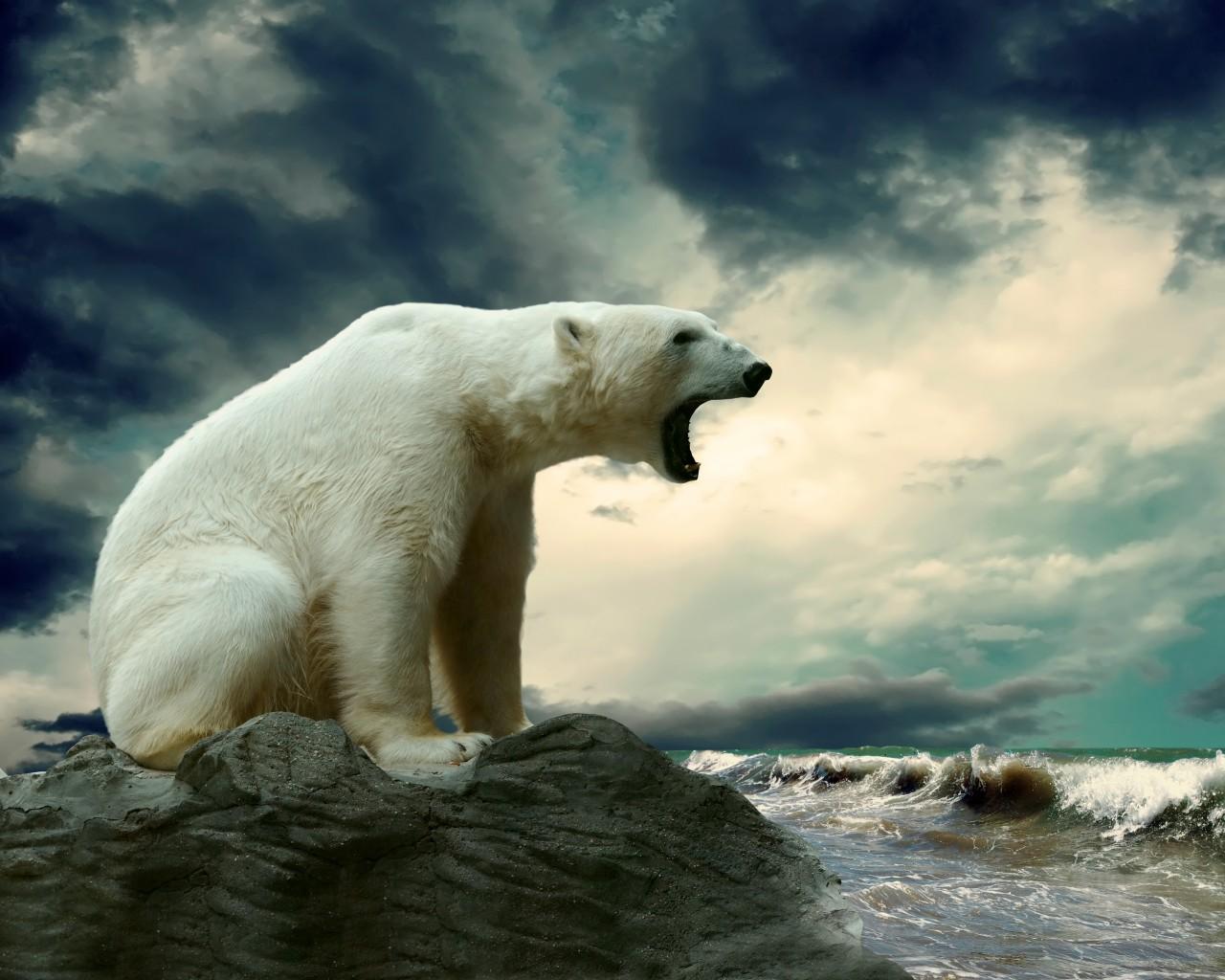 картинки для рабочего стола медведи: