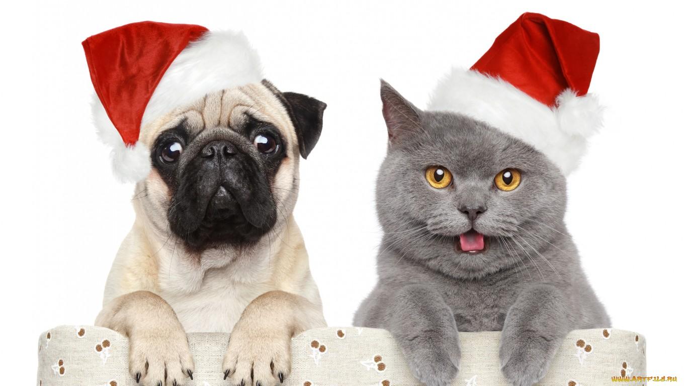 Новогодние открытки с животными