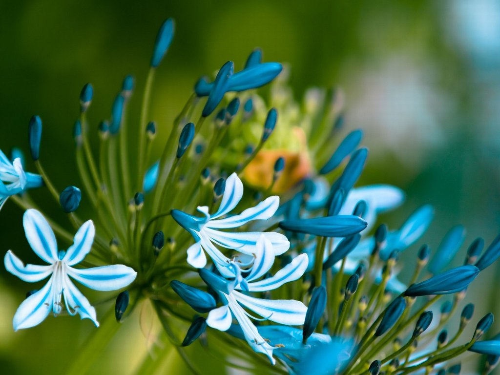 Цветы 1024 x 768
