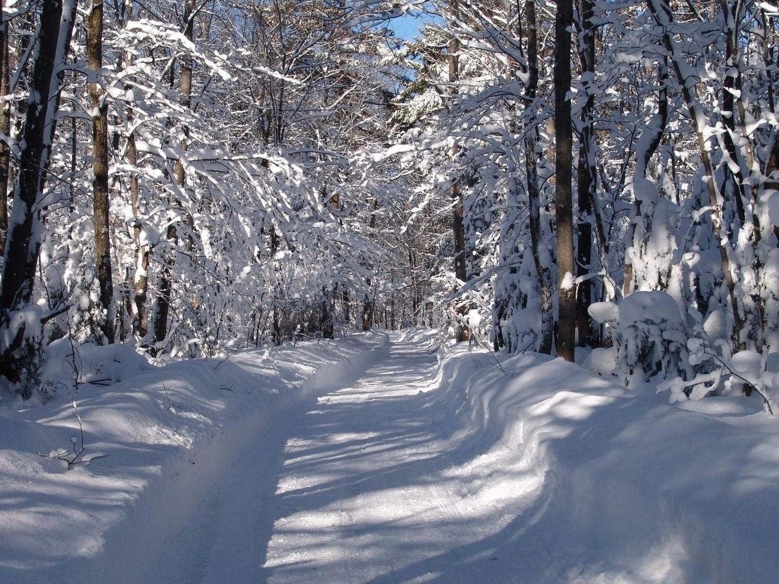 Зимний лес 1600 x 1200