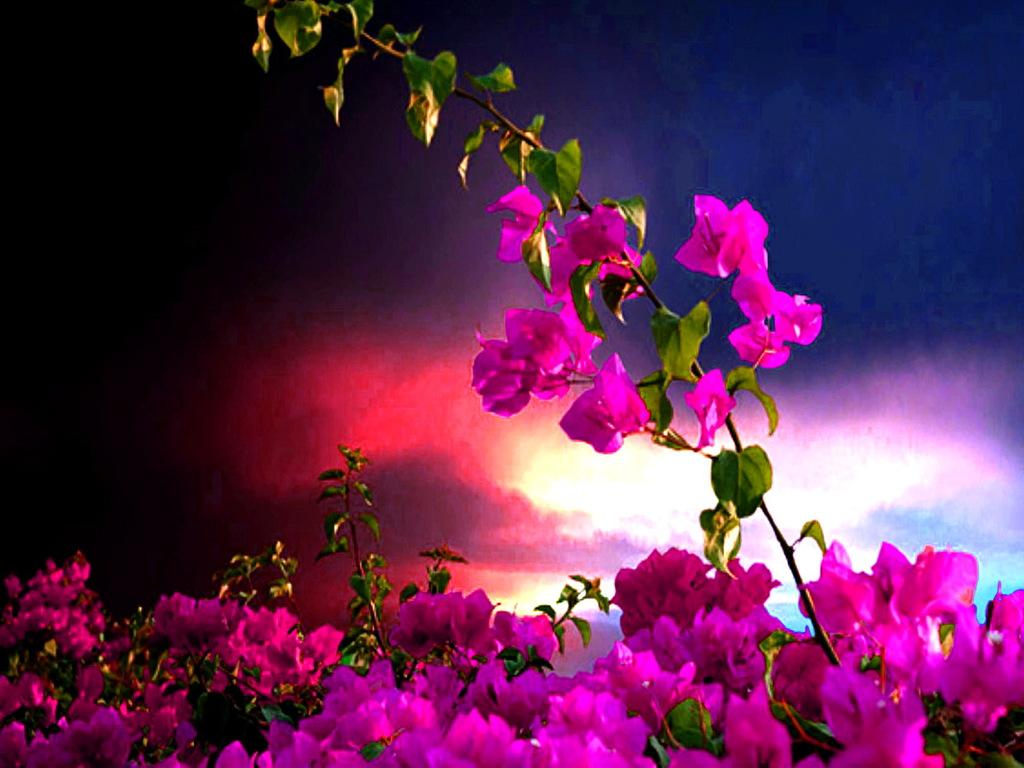 Цветы на фоне заката 1024 x 768