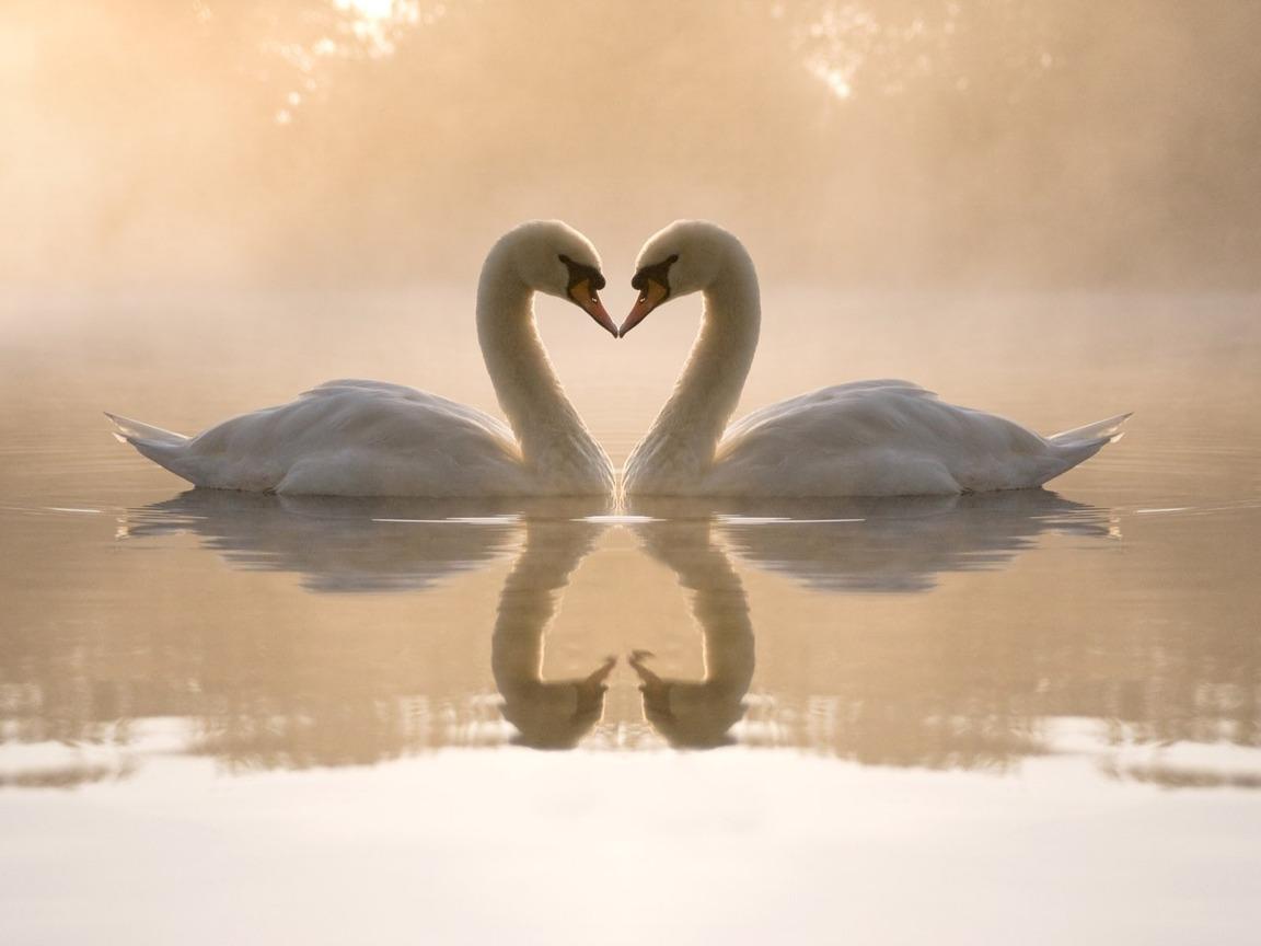 Лебеди 1152 x 864