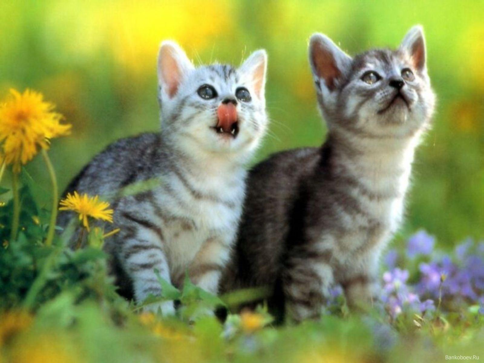 посмотреть картинки про кошек 9. посмотреть картинки про кошек.