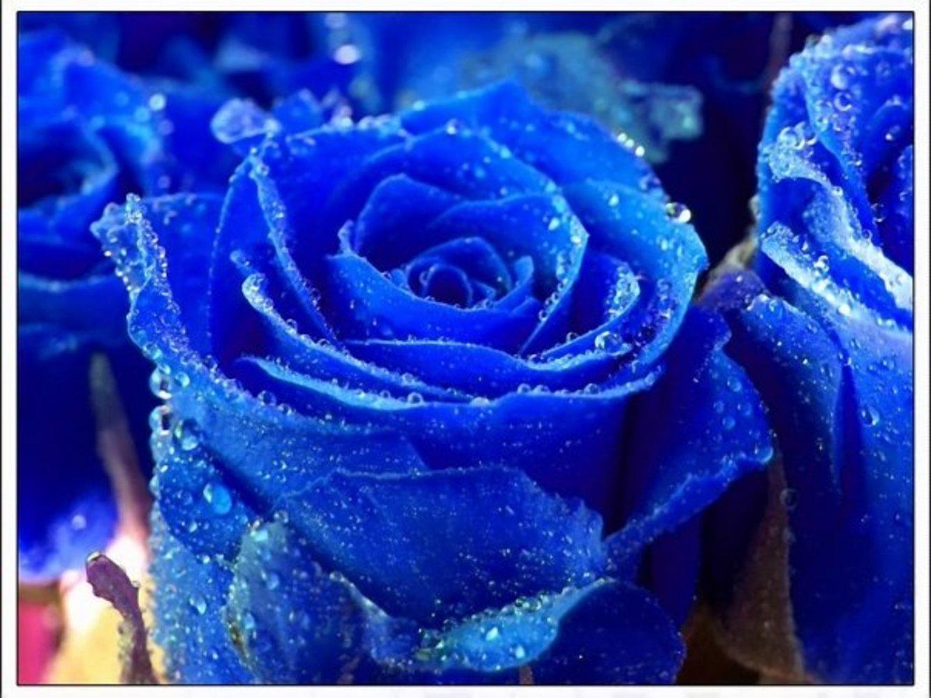 Сонник Цветок приснился, к чему снится Цветок во сне видеть?