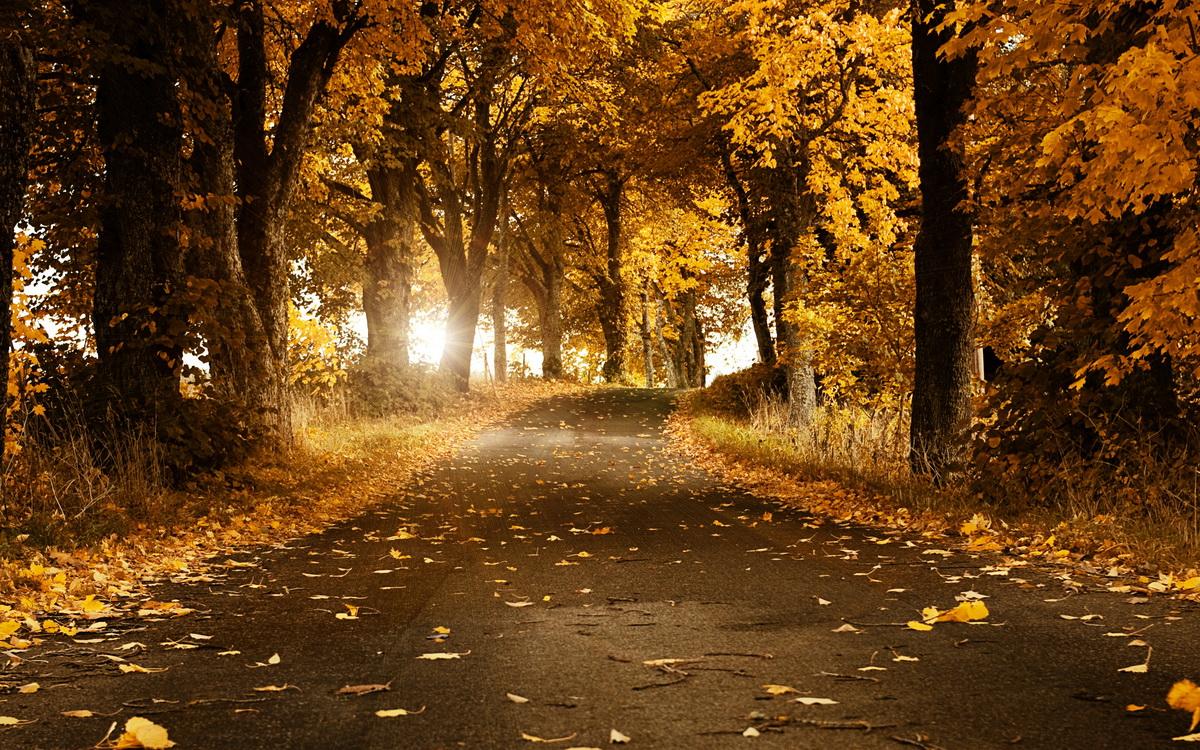 Золотая осень обои на рабочий стол