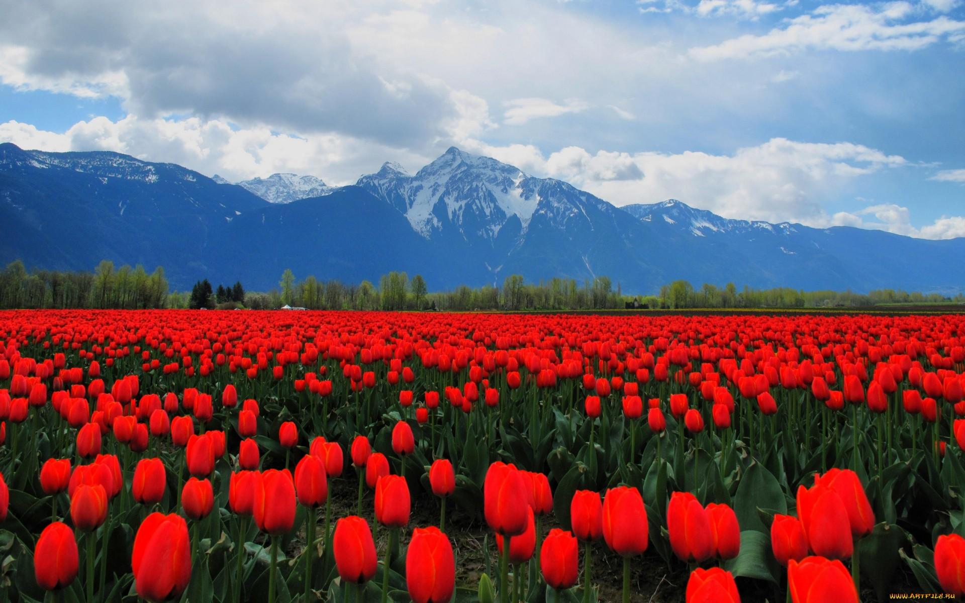 Фото на рабочий стол цветы качественно