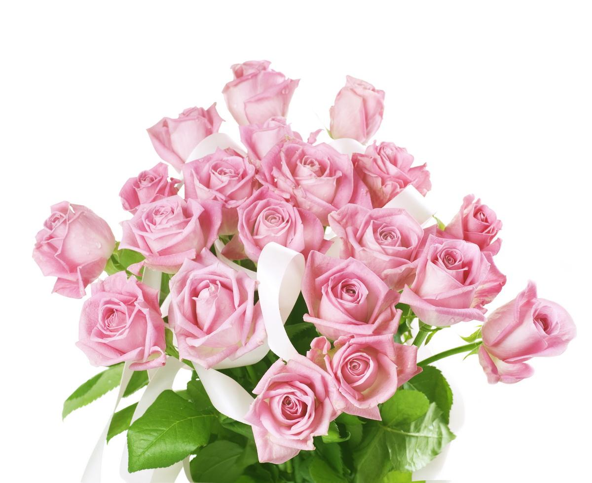 Обои розы на рабочий стол широкоформатные - b