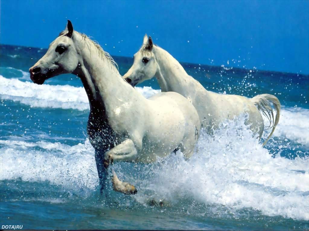 Белые лошади обои на рабочий стол