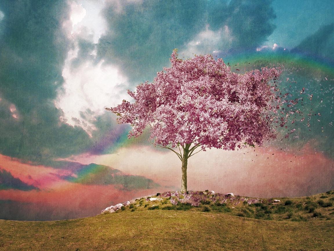 Широкоформатные обои. небо. ветер. розовое дерево. акварель. радуга