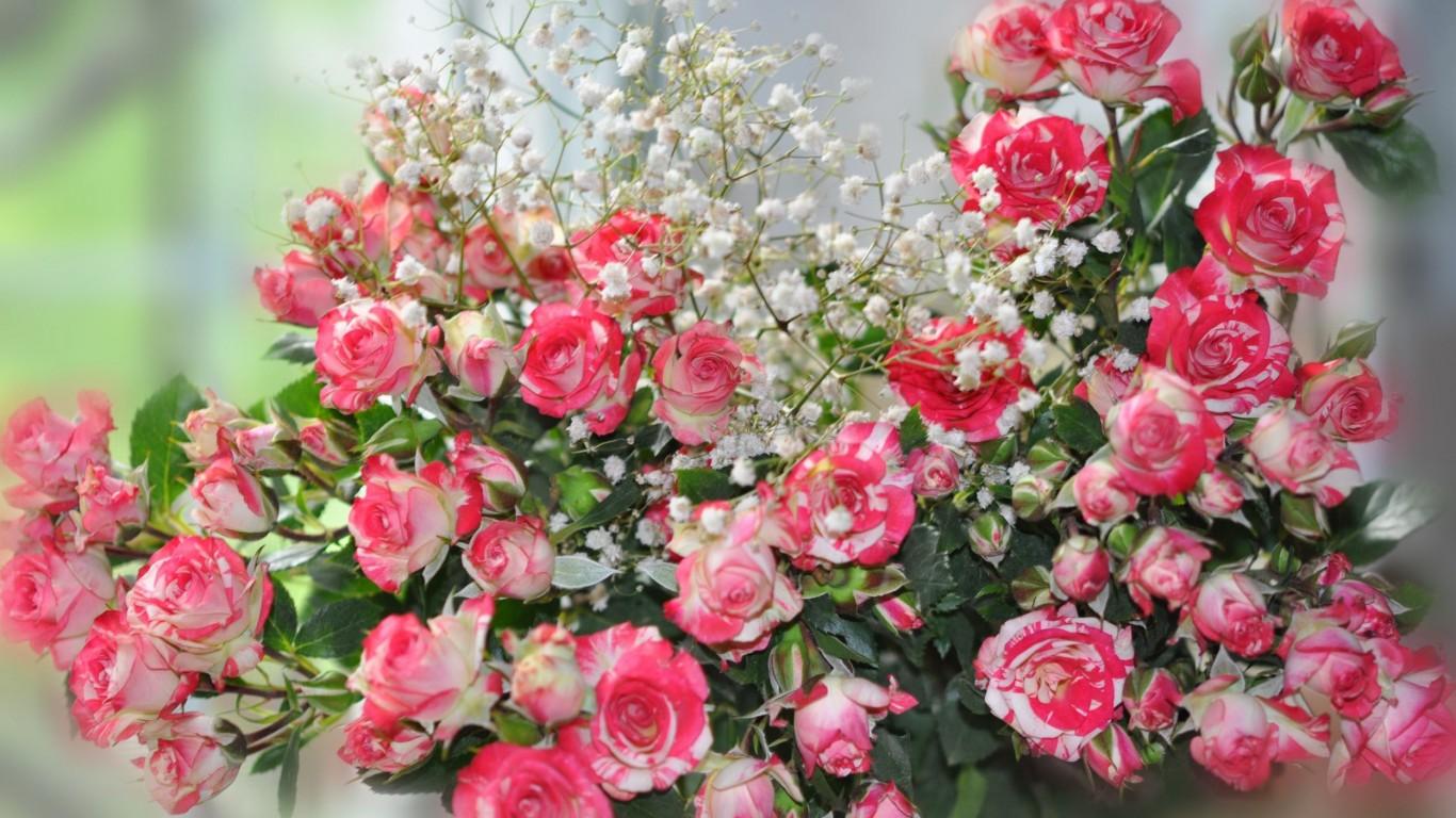 Обои розы на рабочий стол широкоформатные - 8917