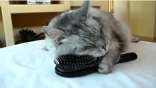 милаха котёнок фото