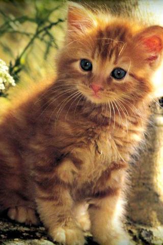 Котята вертикальные картинки